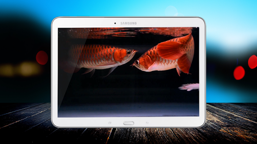 Romantic Arowana LiveWallpaper
