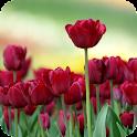 Tulips Live Wallpaper Plant icon