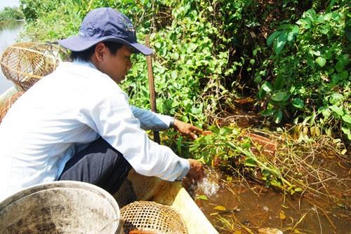 Mùa mưa về vườn quốc gia U Minh Hạ đặt lờ bắt cá 3