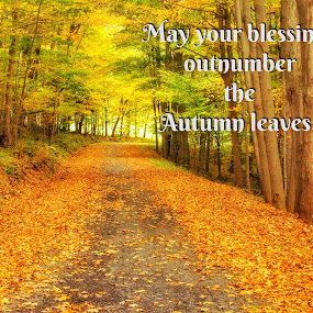 Road to blessings by Pamela Hammer - Typography Quotes & Sentences ( fall, illustration, trees, road, typography, quotes and sayings,  )