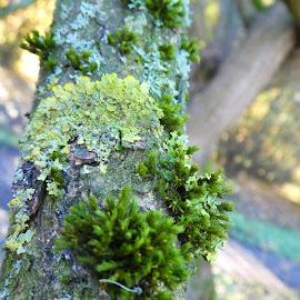 The fungi and moss on a tree by Svetlana Saenkova - Nature Up Close Mushrooms & Fungi ( moss, fungi,  )