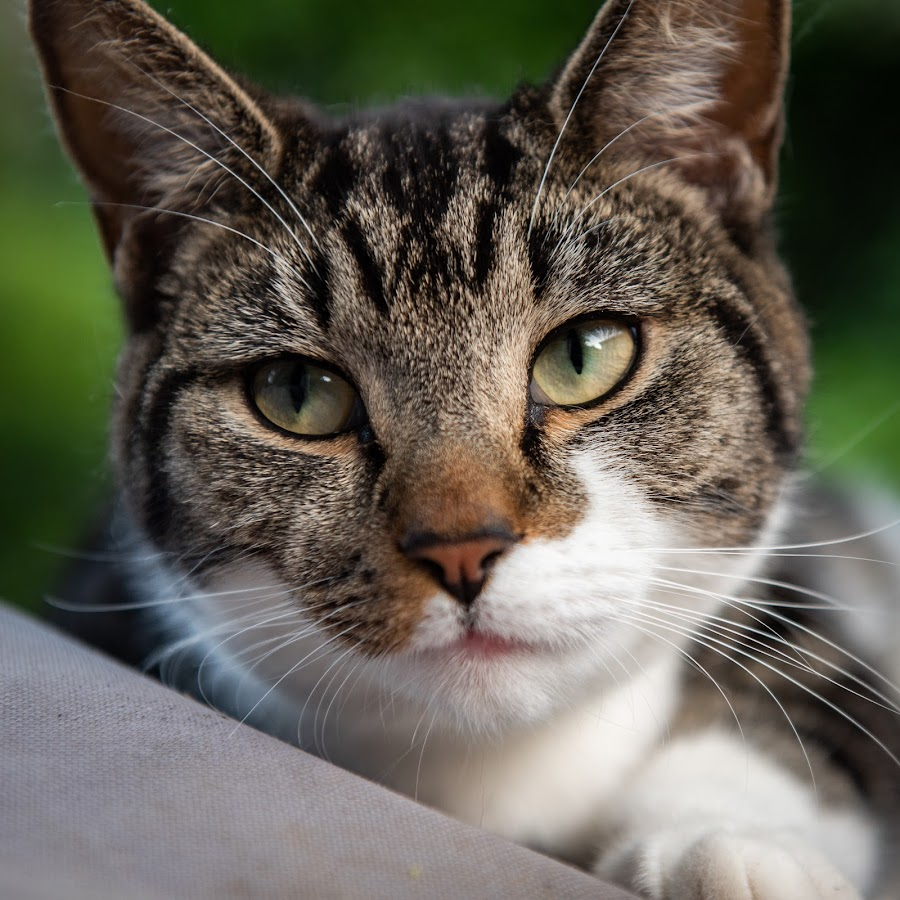 by Phil Milmine - Animals - Cats Portraits
