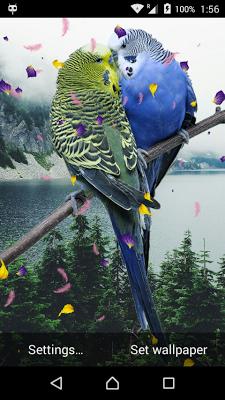 Love Birds Live Wallpaper - screenshot