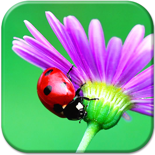 Ladybug HD Live Wallpaper Icon