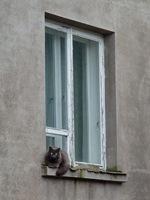 seinaga sobiv kass