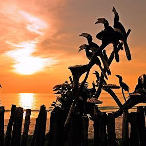 beautiful sunset by Jordan Toh - Landscapes Sunsets & Sunrises ( hornbill, clouds, silhouette, sea, malaysia, golden color, beach, landscape, feefing, bird, sky, pangkor island, perak, senset, lumut )