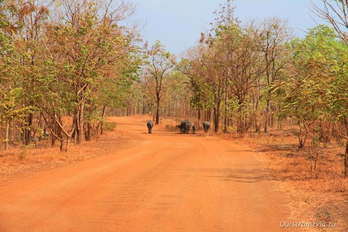Дорога к храму Кох Кер, Камбоджа