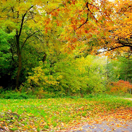 Lake Park Milwaukee by Dawn Marie - Nature Up Close Trees & Bushes ( milwaukee, wisconsin, nature, park, grass, autumn, colors, path, trees, leaves, branches,  )