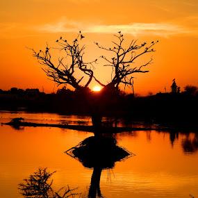 Before the sunset... by Shambaditya Das - Novices Only Objects & Still Life ( #dusk, #kutch, #nature, #india, #sunset, #tree, #gujrat, #serene,  )