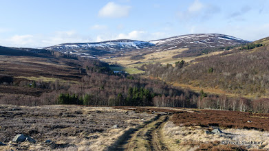 Photo: Late afternoon in February in Glen Gairn