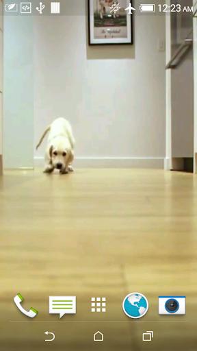 Pups Running Video Wallpaper