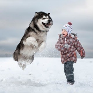 For Dog Lovers 7