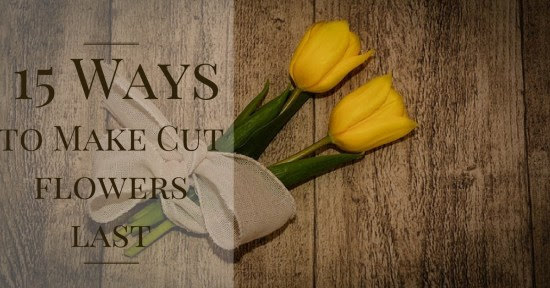 Top Ways to Make Cut Flowers Last Without Chemicals
