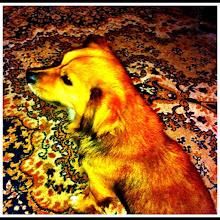 Photo: Pet portrait #intercer - via Instagram, http://instagr.am/p/K7FjJfpfrC/