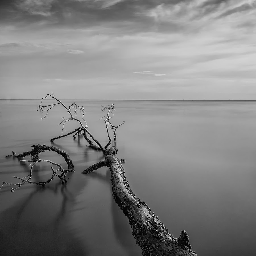 akar by Fadzly Sham - Landscapes Waterscapes ( black and white, b and w, landscape, b&w, monotone, mono-tone )