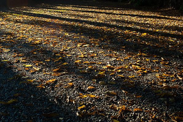 Ombre e foglie di Inazur