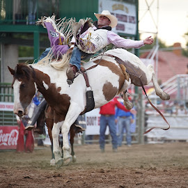 Bronc rider by John Dodson - Sports & Fitness Rodeo/Bull Riding ( bronc rider, bareback, bronc )