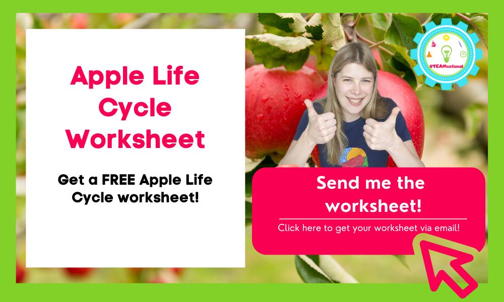 apple life cycle worksheet