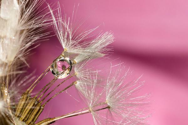 Flower drop di Elisa Valdambrini ph