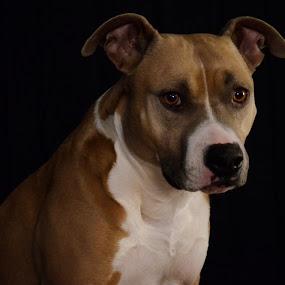 by Sean Valdez - Animals - Dogs Portraits