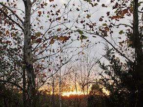 Photo: Slip of the sunset between fall trees at Eastwood Park in Dayton, Ohio.