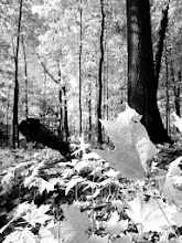 Photo: Black and white photo of an autumn forest at Hills and Dales Park in Dayton, Ohio.