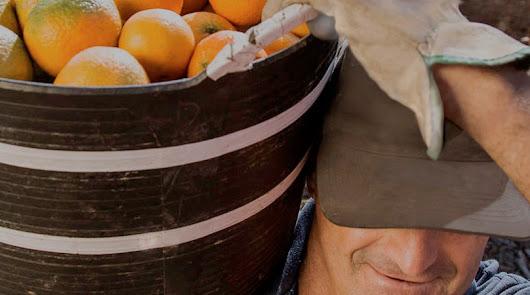 Anecoop se sitúa en el TOP 5 de la industria alimentaria española en RSC