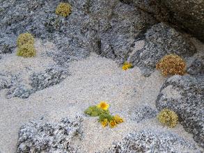 Photo: Vegetazione in riva al Mare.