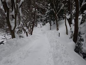 暫くは除雪された林道を進む