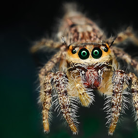 SPEECHLESS  by Ahmad Zaini - Animals Insects & Spiders