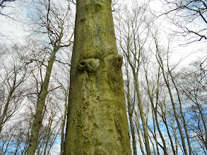 Photo: silent tree inspired by +Andy Q. and for #treestuesday & #pareidolie
