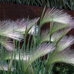 Fan Grass by Dale Fillmore - Nature Up Close Leaves & Grasses ( close up, fan, nature, grass, colors )