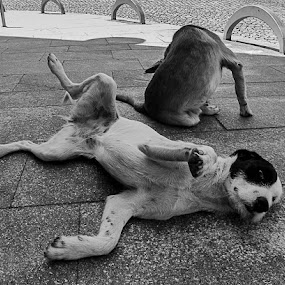 Cães Abandonados nas ruas by Zulmira Relvas - Animals - Dogs Playing (  )