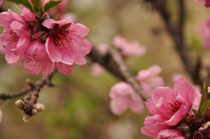 Profumo di primavera di filipposalamone