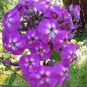 Indigo Magic by Denise DuBos - Flowers Flower Gardens ( sun light, gardens, indigo magic, accents, jayne way gardens, buds )