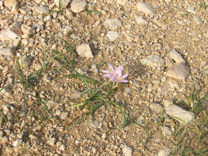 Photo: Flowers are growing on a dirt road