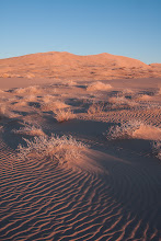 Photo: Golden hour on Kelso Dunes