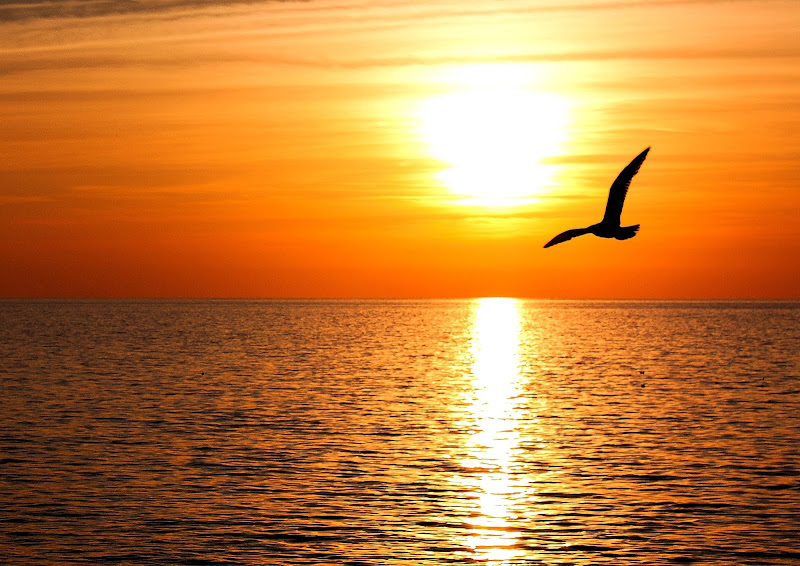 Gabbiano nel tramonto di Foxma