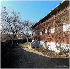 Photo: Măr (Malus), Nuc, Vita de vie - din Turda, Str. Salinelor, Nr.15, curte - 2018.12.01