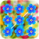 Spring Flowers Pattern Lock Screen for PC-Windows 7,8,10 and Mac