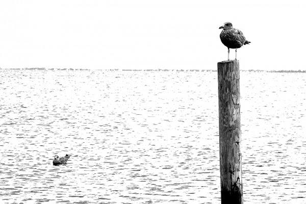 Vita da uccelli di Andrea_Bottai