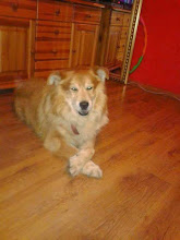 Photo: A to pozdrowienia od Bursztyna :) Niegdyś króla Ani, dziś mojego domowego tyrana. Magdalena Górna