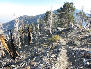 Photo: Heading northeast on the fine trail leading 0.2 mile from Mt. Hawkins to PCT. This was the trail I should have been on last night!