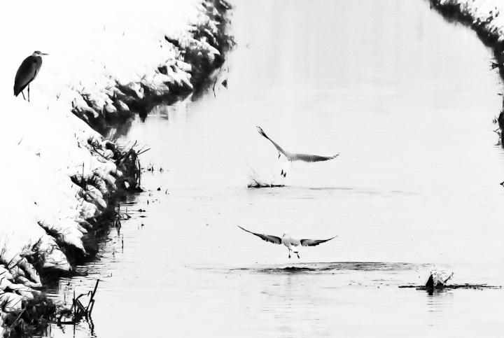 Banchetto...al fiume di flaviogallinaro