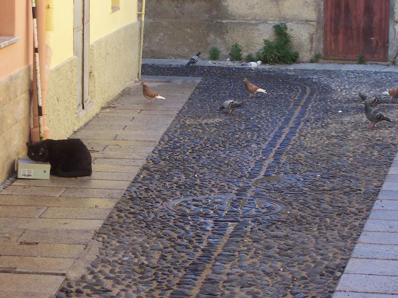 il gatto di Pretoriano
