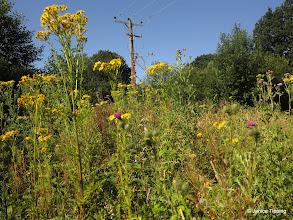 Photo: Wild Flowers on railway path