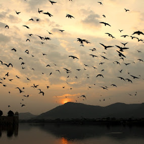 The Skyline by Piyush R. Sharma - Landscapes Sunsets & Sunrises ( clouds, hills, jaipur, lake, jalmahal, architecture, landscape, morning, birds, photography, flying, piyushrsharma, foggy, skylines, sunrise,  )