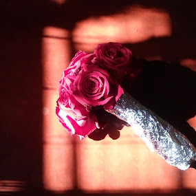 Red Roses by Satabdi Datta - Artistic Objects Still Life ( red, android, still life, roses, sunrays, red rose,  )