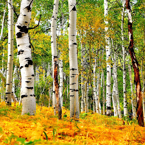 by Aaron Despain - Landscapes Forests