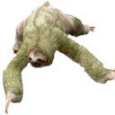 Sloth Wallpaper HD New Tab Themes